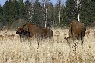 Polens Wälder und mehr. Umfangreiches Programm zu Natur und Kultur unseres Nachbarlands für die ganze Familie