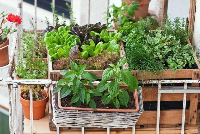 Die 5 besten Lifehacks für Garten und Balkon