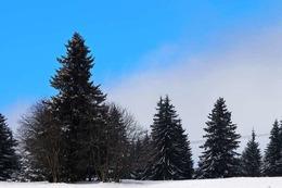 Fotos: Winter auf dem Feldberg