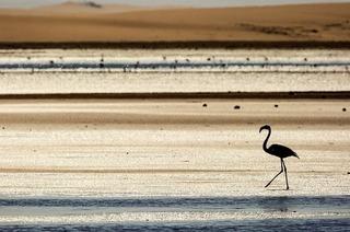 """TRUZ Forum Naturfotografie mit Gerald Kindermanns """"Namibia""""-Vortrag im Lörracher Dreiländermuseum"""