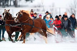 Fotos: 500 Zuschauer beim Pferdeschlittenrennen in St. Märgen
