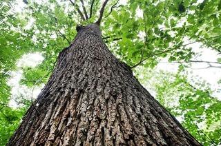 """Forstwissenschaftler zum Eichwald: """"Das sind keine Kahlschläge"""""""