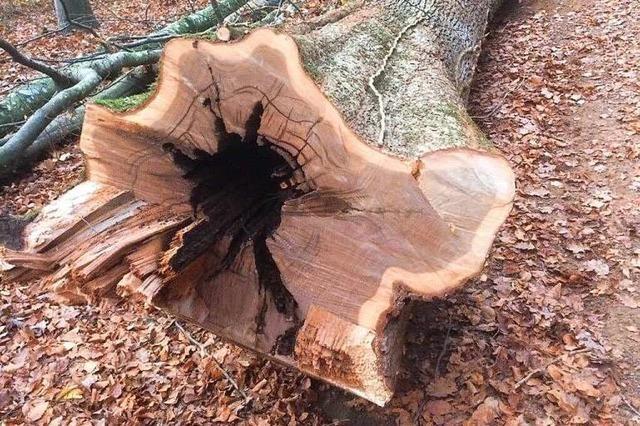 Ein runder Tisch soll den Streit um den Müllheimer Eichwald lösen