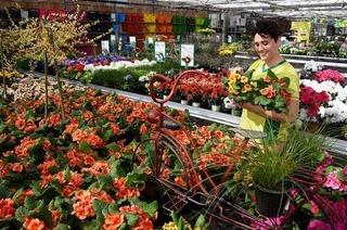 """""""Sauter – Grün erleben"""": von der Macht der Blumen"""