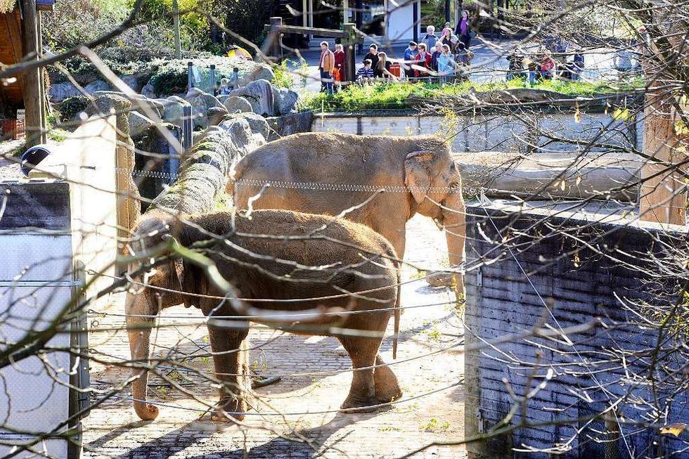 Zoologischer Stadtgarten - Karlsruhe