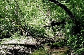 Naturschutzgebiet Krebsbach (Haltingen)