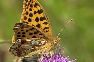 An Tag und Nacht Exkursionen zum Tag der Artenvielfalt