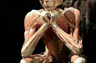 Die letzten Tage der Körperwelten-Ausstellung in Freiburg