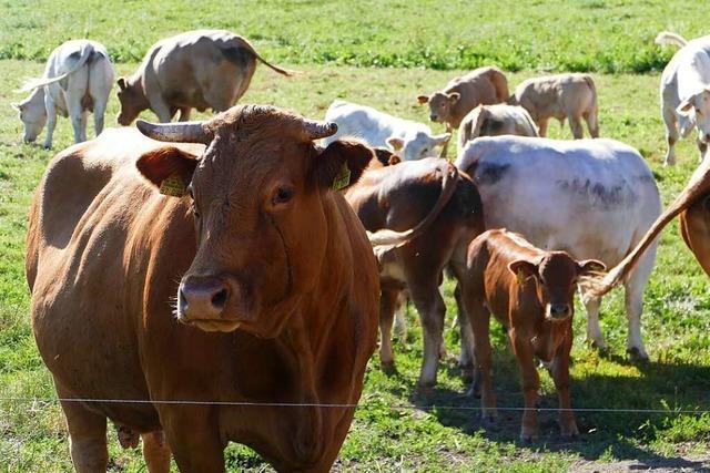 Warum Fleisch zu essen dem Klima schadet