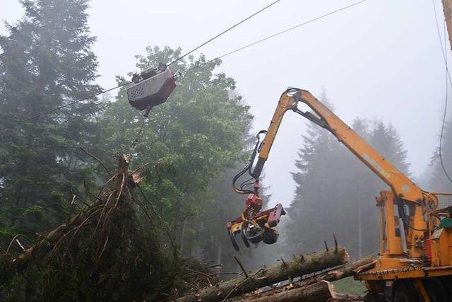 So werden Bäume in Steillagen des Hochschwarzwalds gefällt
