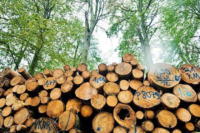 Welche Möglichkeiten es gibt, den Wald im Landkreis zu retten