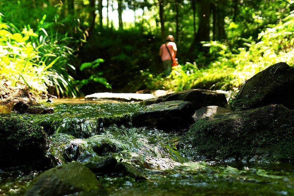 Wasserpfad Sulzbachtal - Lahr