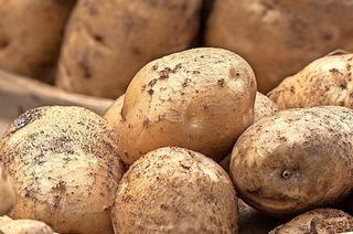 Kartoffeln erwerben und genießen in Ühlingen-Birkendorf
