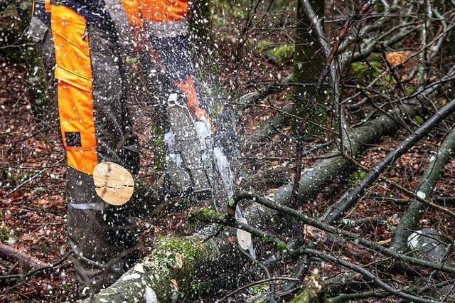 Wie man richtig mit Motorsägen im Wald umgeht