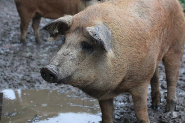 Der Melchernhof in Ibental setzt auf seltene Tierarten und Bio-Standard