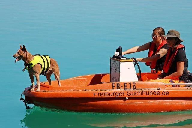 Rettungshunde helfen bei der Suche nach Vermissten