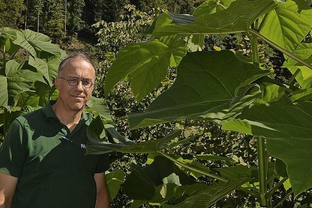 Im Liliental werden Bäume erforscht – Wie reagieren sie auf den Klimawandel?