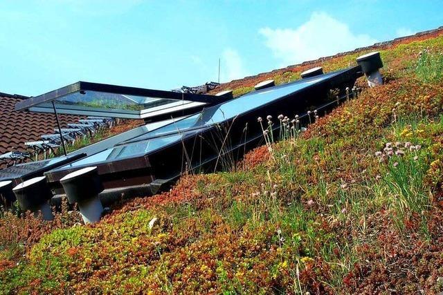 Dachgärten und begrünte Dächer