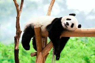 12 Zoos und Aquarien, deren Tiere du online besuchen kannst