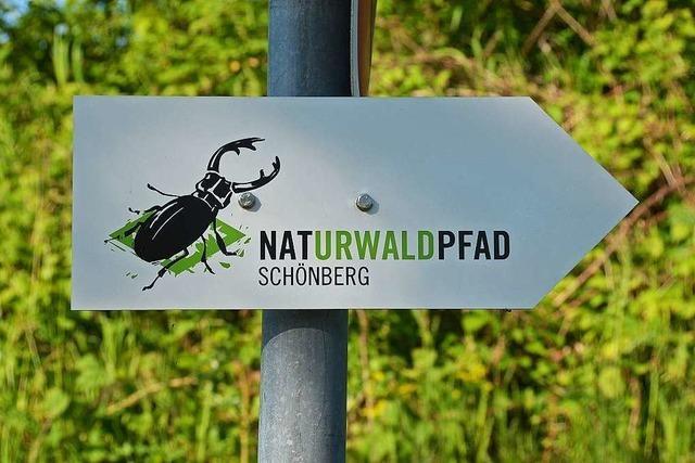 Naturwaldpfad am Schönberg