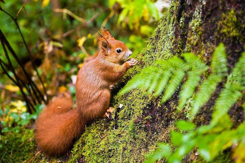 Eichhörnchenwald - Hinterzarten