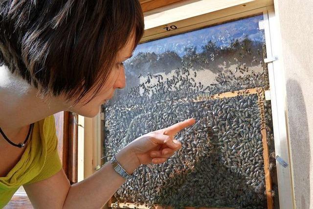 Auf dem Erlebnispfad im Schambachtal können Kinder Bienen bei der Arbeit beobachten