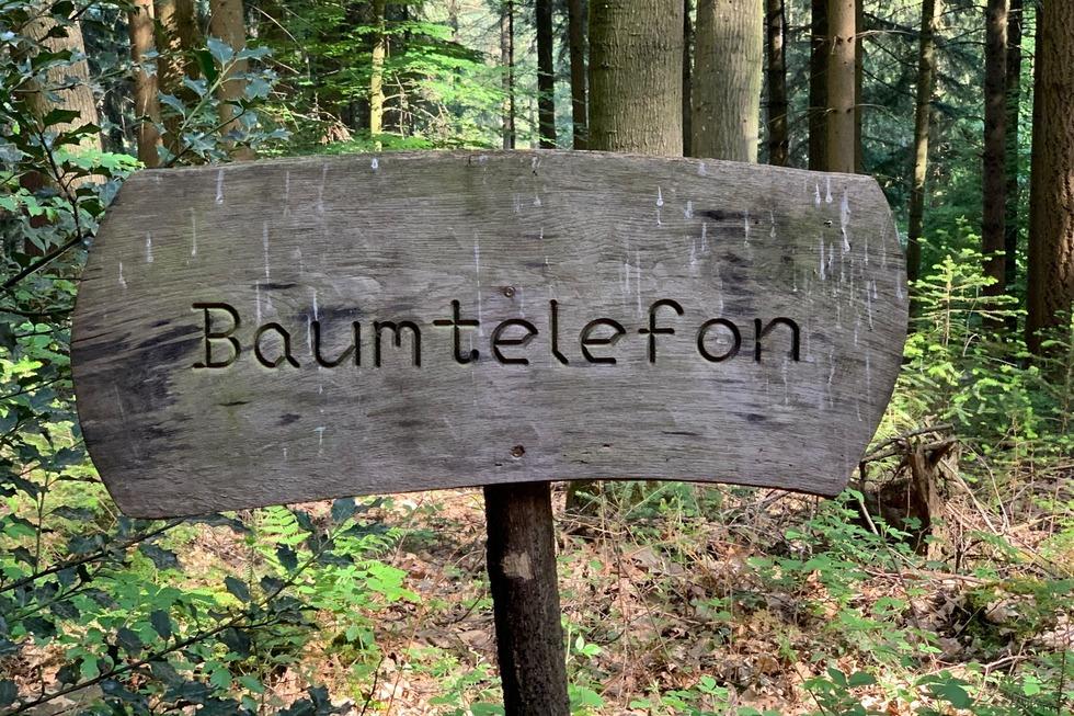 Walderlebnispfad Rollberg (Ottoschwanden) - Freiamt