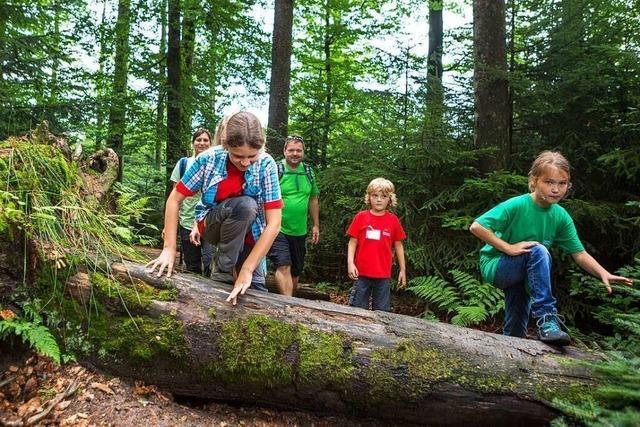 Auf Erlebnispfaden unterwegs im Nationalpark Schwarzwald