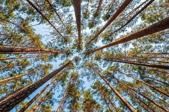 Der Wald ist in Gefahr – und keine Rettung ist in Sicht