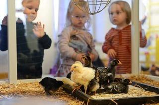 Freiburger Museum Natur und Mensch feiert 125-jähriges Bestehen