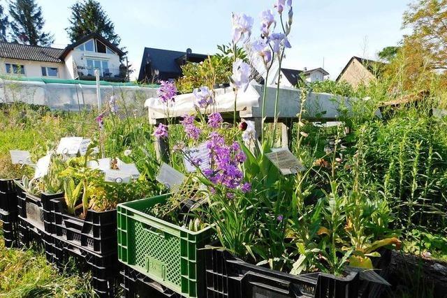 In einem Garten in Schallstadt wachsen Zutaten für frischen Kräutertee