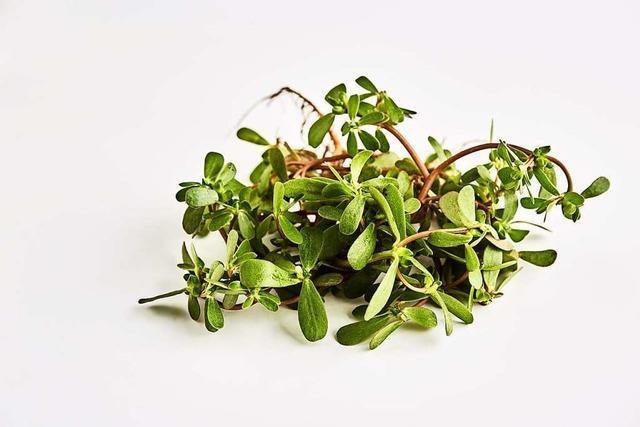 Sommerportulak kann Salate mit einer salzig-nussigen Note bereichern