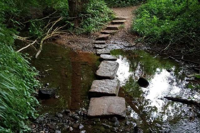 Wanderung: Eine kleine Wasser-Wald-Welt in Lahr-Sulz