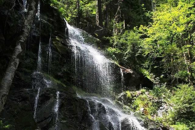 Durch mystisch anmutenden Wald zu den Zweribachwasserfällen in St. Peter