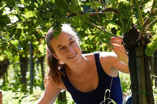 Was macht die junge Generation im Weinbau anders?