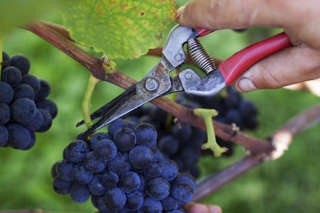 Warum manche Weine billig und andere sehr teuer sind