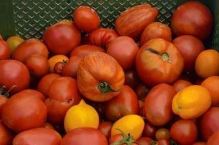 Michels Kleinsthof - Solidarische Landwirtschaft