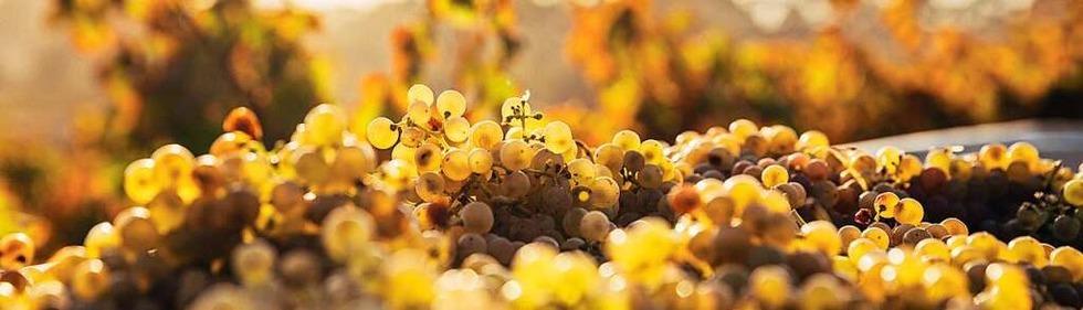 Weinwissen – Was Sie schon immer über Wein wissen wollten