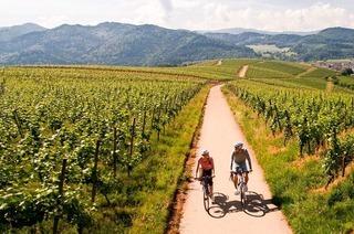 Entlang des Badischen Weinradwegs Radeln und Wein genießen