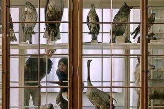 """Soundcollage """"L'Imitation of Life"""" von Hecke/Rauter über das Handwerk der Tierpräparation zu Gast Naturkundemuseum Basel"""