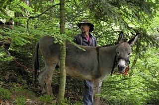 Mit dem Esel durch den Schwarzwald wandern