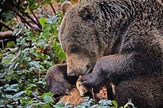 Faszinierende Tierwelt