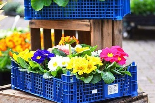 Blumenpavillion Reinhard Himmelsbach