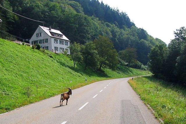 100 Kilometer über steile Berge und durch zauberhafte Landstriche