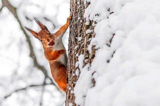 """""""Keinesfalls ist der Wald im Winterschlaf"""""""