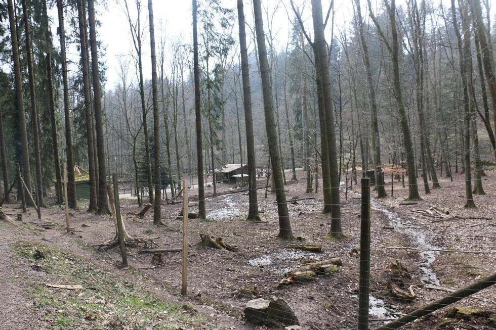 Wildgehege - Bad Säckingen