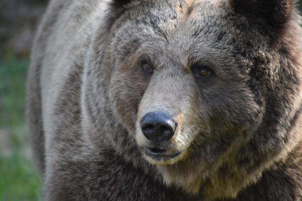 Alternativer Wolf- und Bärenpark Schwarzwald - Bad Rippoldsau-Schapbach